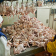 Poultry processing in food industry — Stok Fotoğraf #30434621