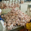Stock Photo: Poultry processing in food industry