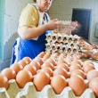 Egg chicken farm, packing lines — Stock Photo #30434765
