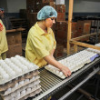 Egg chicken farm, packing lines — Stock Photo #30434771
