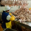 Poultry processing in food industry — Stock Photo