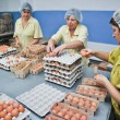 Egg chicken farm, packing lines — Stock Photo