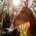 Horse — Stock Photo #30858135