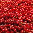 Redcurrant — Stock Photo #30858273