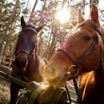 Horse — Stock Photo #30858437