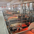 Pig farms — Stockfoto