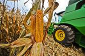 Removes corn harvester — Stock Photo