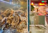 Oysters in an aquarium — Stock Photo