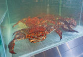 King crabs live in the supermarket — Stock Photo