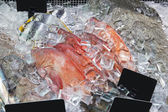 Fish on ice in supermarket — Stock Photo