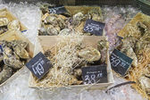 Oysters on the market — Stock Photo