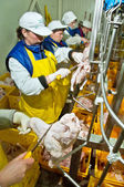 Processing factory chicken — Stock fotografie