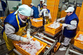 Chicken processing plant — Stock Photo