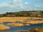 Marshland Near Marazion Cornwall — Stock Photo