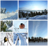 Winter picture Collage — Foto Stock