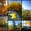 Stock Photo: Autumn picture collage