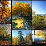 Autumn picture collage — Stock Photo