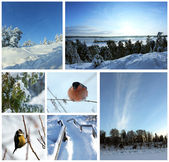 Collage de fotos de invierno — Foto de Stock