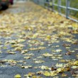 Autumnal street — Stock Photo #13375041