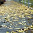 Autumnal street — Stock Photo