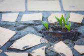 Germogli in crescita dalla pavimentazione — Foto Stock