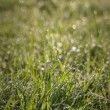 Stock Photo: Spring grass