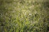 Grama de primavera — Fotografia Stock