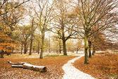 Winter landscape of Richmond Park — Stock Photo