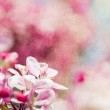 Retro spring background with pink flowers — Stock Photo #18573749