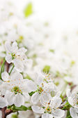Spring flowers on light  background — Stock Photo