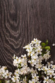 Spring flowers on dark wooden background — Stock Photo