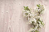 Spring flowers on white wooden background — Stock Photo