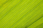 Green fresh leaf closeup background — Stock Photo
