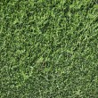 Green foliage wall background -  