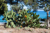 Cactus nea beautiful small beach in Spain — Stock Photo