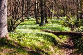 Prachtige wilde bloemen in bos — Stockfoto
