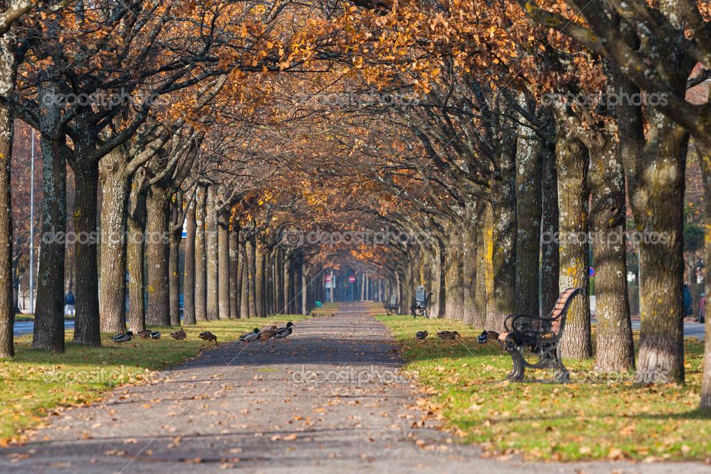 多彩秋天树叶风景
