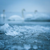 Ice closeup in the sea water — Stock Photo