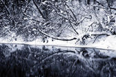 Winter forest river under the snow — Stock Photo