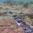 Peat bog swamp Europe - Stock Photo