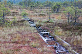 Peat bog swamp Europe — Stock Photo