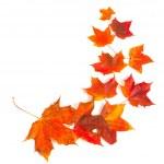 Autumn maple leaves — Stock Photo #13284547