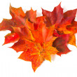 Autumn maple leaves, heart shape — Stock Photo #13358754