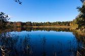 黄色と青秋の池の木に葉します。 — ストック写真