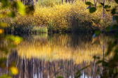 Autumn pond reflection — Stock Photo