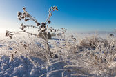 Snowy hay bales — Stock Photo