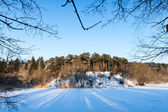 Frozen river and trees in winter season — Stockfoto