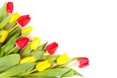 Fresh tulips isolated on white background — Stock Photo