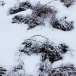 Snow covered branches in winter forest — Stock Photo #19639279