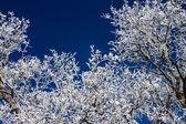 деталь дерево зимой — Стоковое фото
